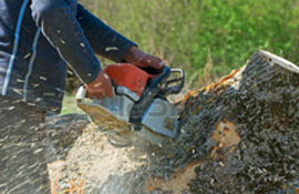 stump being ground and removed