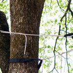 tree harnessed
