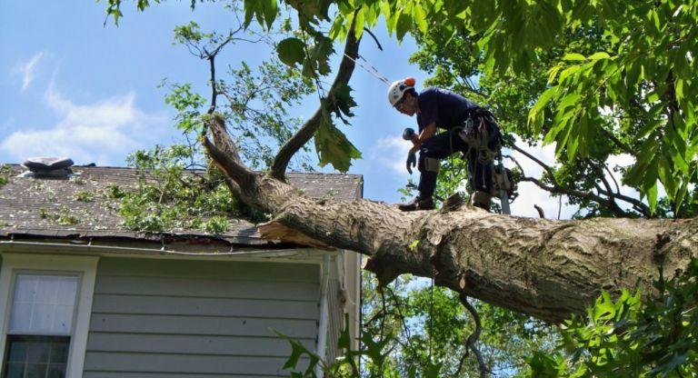 emergency tree service