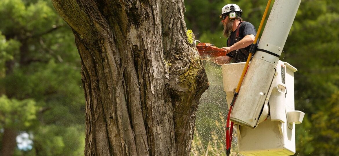 Common Services Offered by Arborists