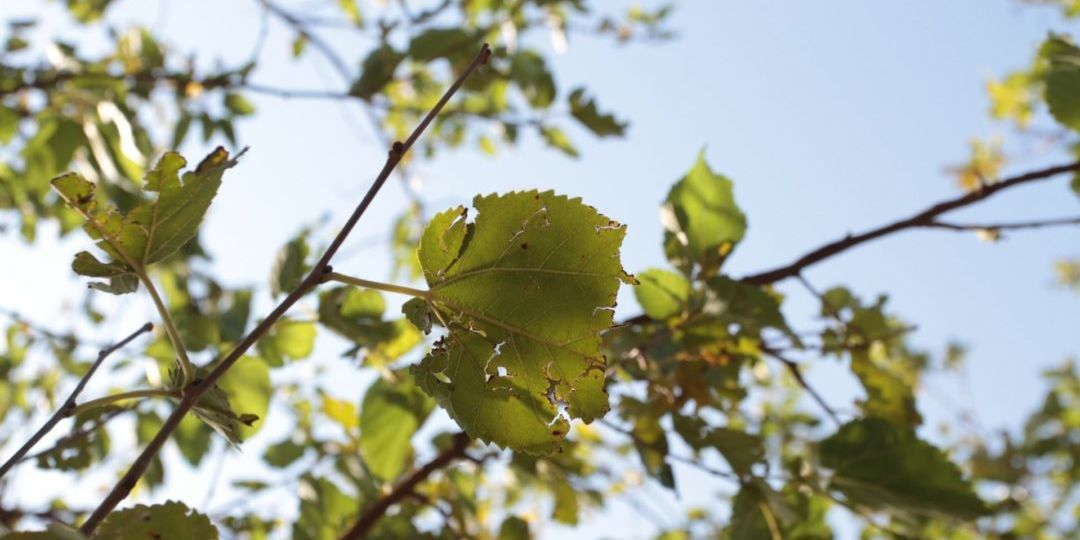 How Arborists Help with Common Tree Diseases