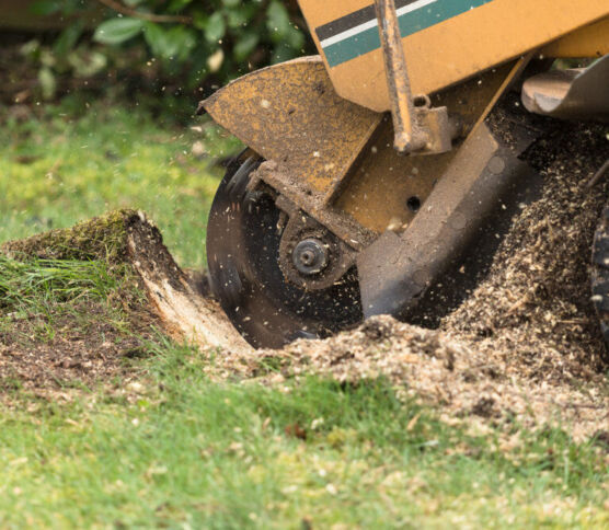 Stump Grinding or Stump Removal? What's The Best Solution?